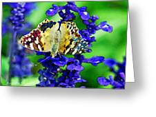 Beautiful Butterfly On A Flower Greeting Card