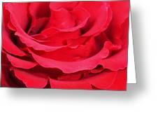 Beautiful Close Up Of Red Rose Petals  Greeting Card