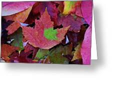 Beautiful Colors Of Fall Greeting Card