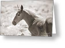 Beautiful Colt Greeting Card