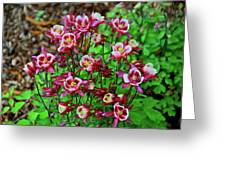 Beautiful Columbine   Greeting Card