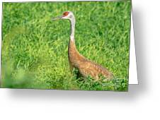 Beautiful Crane Greeting Card