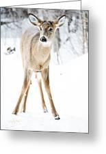 Beautiful Deer Greeting Card