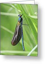 Beautiful Demoiselle Damselfly Greeting Card by Science Photo Library