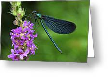 Beautiful Demoiselle Male Switzerland Greeting Card