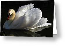Beautiful Display Greeting Card