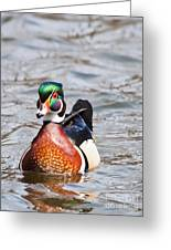 Beautiful Duck Greeting Card