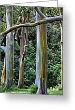 Beautiful Eucalyptus Greeting Card