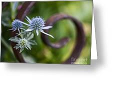 Beautiful Flower Buds Greeting Card