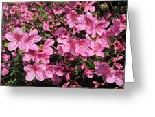 Beautiful Flowers Greeting Card