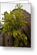 Beautiful Golden Chain Tree In Full Bloom Greeting Card