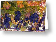 Beautiful Grape Harvest Greeting Card