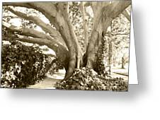 Beautiful Griffith Park Huge Trunk Tree Sepia Black White Vintage Earthy Fine Art Decorative Print Greeting Card by Marie Christine Belkadi