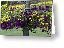 Beautiful Hanging Flowers Greeting Card