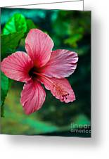 Beautiful Hibiscus Greeting Card