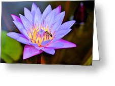 Beautiful Lily And Visiting Bee Greeting Card