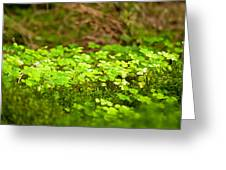 Beautiful Lush Green Nature Background Greeting Card