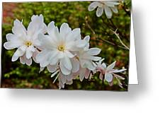 Beautiful Magnolias 2 Greeting Card by Victoria Sheldon