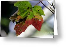 Beautiful Maple Leaf Greeting Card