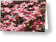 Beautiful Nature Greeting Card