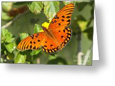 Beautiful Orange Butterfly - Gulf Fritillary Greeting Card