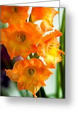Beautiful Orange Gladiolus Greeting Card
