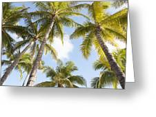 Beautiful Palms Greeting Card