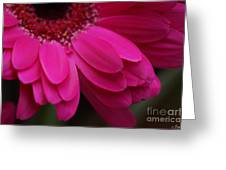 Beautiful Petals Greeting Card