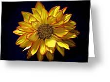 Beautiful Petals Greeting Card