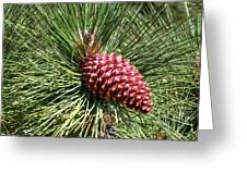 Beautiful Pine Greeting Card