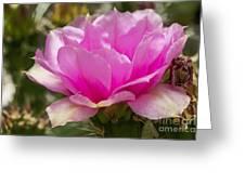 Beautiful Pink Cactus Flower Greeting Card