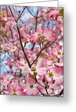 Beautiful Pink Dogwood Tree Flowers Greeting Card