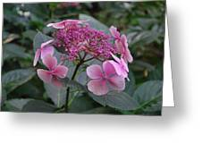 Beautiful Pink Flowers Greeting Card