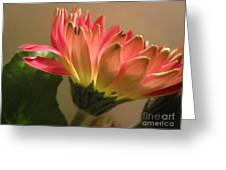 Beautiful Pink Gerbera Daisy 2 Greeting Card