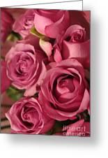 Beautiful Pink Roses 6 Greeting Card