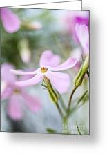 Beautiful Pink Spring Flowers Greeting Card