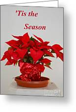 Beautiful Poinsettia Plant - No 2 Greeting Card