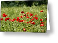 Beautiful Poppies 1 Greeting Card