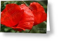 Beautiful Poppies 10 Greeting Card