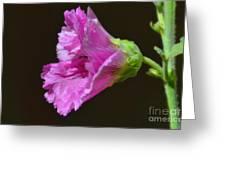 Beautiful Purple Flower Greeting Card