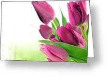 Beautiful Purple Tulips  Flower Greeting Card