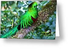 Beautiful Quetzal 2 Greeting Card