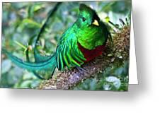 Beautiful Quetzal 4 Greeting Card