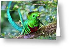 Beautiful Quetzal 5 Greeting Card