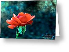 Beautiful Red Rose Greeting Card