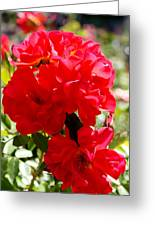 Beautiful Red Roses Greeting Card