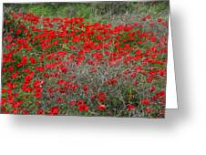 Beautiful Red Wild Anemone Flowers In A Spring Field Greeting Card