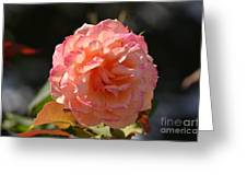 Beautiful Rose Blossom Greeting Card