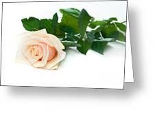 Beautiful Rose On White Greeting Card
