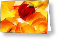 Beautiful Roses Valentine Greeting Card by Boon Mee